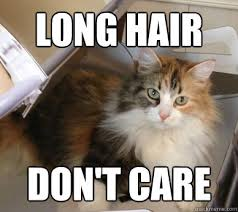 Long Hair Dont Care Meme - long hair don t care cat hair quickmeme