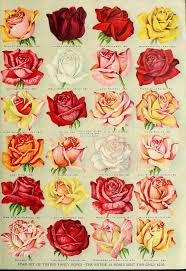 Rose Flower Images Best 25 Vintage Roses Ideas On Pinterest Rose Images Love Rose