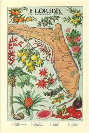 florida native plant society 27 best florida native plants images on pinterest native plants
