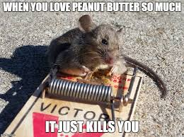 Mouse Memes - mouse hugging peanut butter imgflip