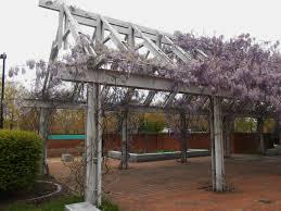 wisteria forest garden