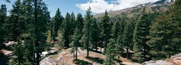 blue spruce home blue spruce rv park cabins