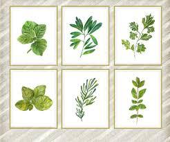 herbe cuisine imprimer des herbes aquarelle cuisine botanique herbe