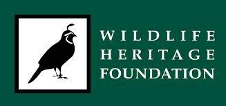 orb weaver spider wildlife heritage foundation