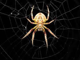 cool spider wallpaper 1600x1200 12326