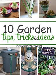 Garden Tips And Ideas 10 Garden Tips Tricks And Ideas