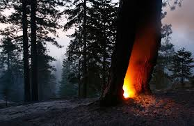 California forest images California 39 s continuing fires photos the big picture jpg