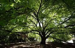 symbolism of trees seeds cultivez votre anglais