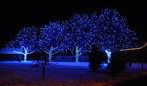 indigo blue tree lights at the dye garden rocky mountain