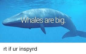 Whaling Meme - whales are big rt if ur inspyrd meme on esmemes com