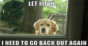Funny Dogs Memes - 20 funny dog memes that will have you in stitches funny dogs