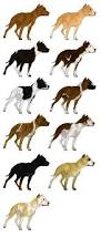 american pitbull terrier traits gamebred american pit bull terrier imports open by bitchfitkennel