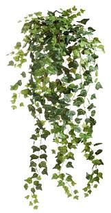 the 25 indoor plants you can u0027t kill english plants and gardens