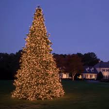 Outdoor Lighted Christmas Decorations Sale by Decoration Ideas Led Lighted Christmas Trees Is The Right Choice