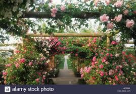 david austin roses wolverhampton pergola with climbing roses and