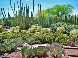 Desert Botanical Garden Arizona 7 Interesting Road Trip Stops In The Southwestern Us Not To Miss