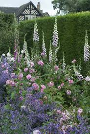 Cottage Garden Ideas Pinterest by Http Gardeningforyou Pw Rose Gertrude Jekyll And Nepeta Six