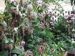 Botanical Garden Orchid Show Garden Walks Nature Walks Sun Design