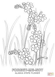 delaware state flower alaska state flower coloring page free printable coloring pages