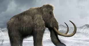 scientists brink bringing extinct woolly mammoth