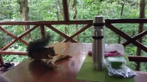 Treehouse Hotel In Costa Rica The Tree House Hotel Costa Rica Youtube