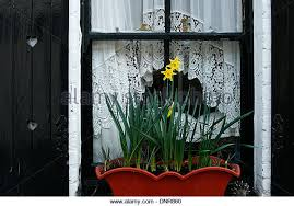 White Curtains With Yellow Flowers Green Net Curtains Stock Photos U0026 Green Net Curtains Stock Images
