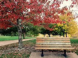 Benches In Park - images of park bench in spring sc