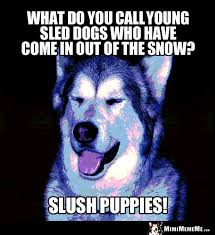 Dog Jokes Meme - dog humor what do you call young sled dogs who have come in out