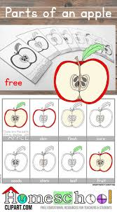 103 best apple theme images on pinterest preschool apples apple