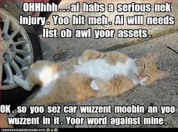 Lawyer Cat Meme - i can has cheezburger lawyer page 2 funny internet cats cat