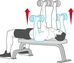 Bench Press With Dumbells - 15 best exercises to improve your chest muscle healthy sporty