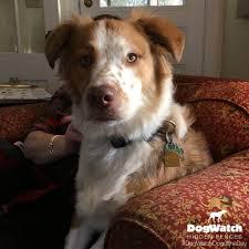 dogwatch salutes national mutt day dogwatch