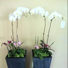 Potted Plants Wedding Centerpieces by 26 Best Orchid Centerpieces Images On Pinterest Orchid