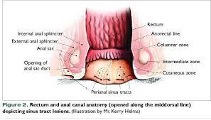 Internal Dog Anatomy Vetfolio