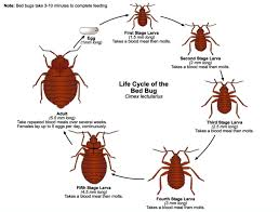 how can you get rid of bed bugs how to kill bed bugs erdye s pest control