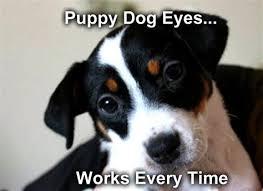 Puppy Eyes Meme - th id oip pigfjf9ro zt1k5tvciufqhafz