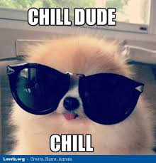 Dog With Glasses Meme - chill dude chill dog with big sun glasses jpg