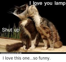Funny Love You Meme - shut up ican i love you l i love this oneso funny funny meme