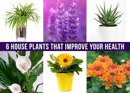 houseplants 6 house plants that improve your health