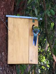 build rosella bird house plans diy pdf ring box wood plan