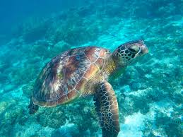 enchantment of sea turtles in cancun