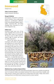 native sonoran desert plants sonoran desert food plants edible uses for the desert u0027s wild