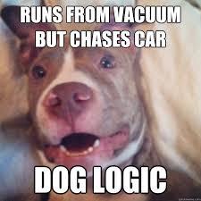 Annoyed Dog Meme - the annoying dog memes quickmeme