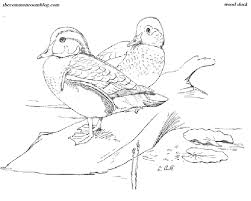 wood duck colouring common room