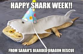 Shark Meme - top 15 shark memes in honor of shark week 2015 hillary sorenson