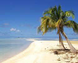 jeep beach wallpaper wallpaper palm coconut tree hd sea sand summer sun sky on amazing
