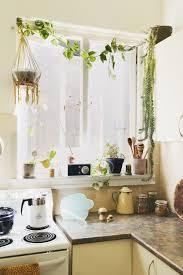 plante pour cuisine ujb des boutures dans ma cuisine