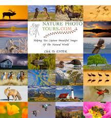 New York wildlife tours images Nature photo tours nature photography scenic photography jpg