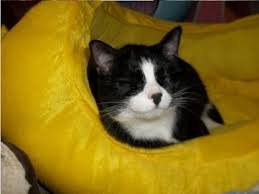 Blind Cat Sanctuary 1197 Best Kitty Rescue Images On Pinterest Animal Rescue Animal