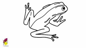 coloring pretty simple frog drawing hqdefault coloring
